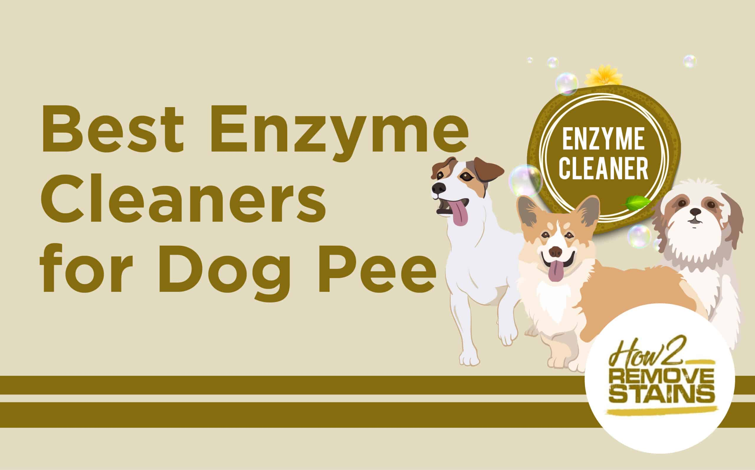 Best Enzyme Cleaners for DOG Pee